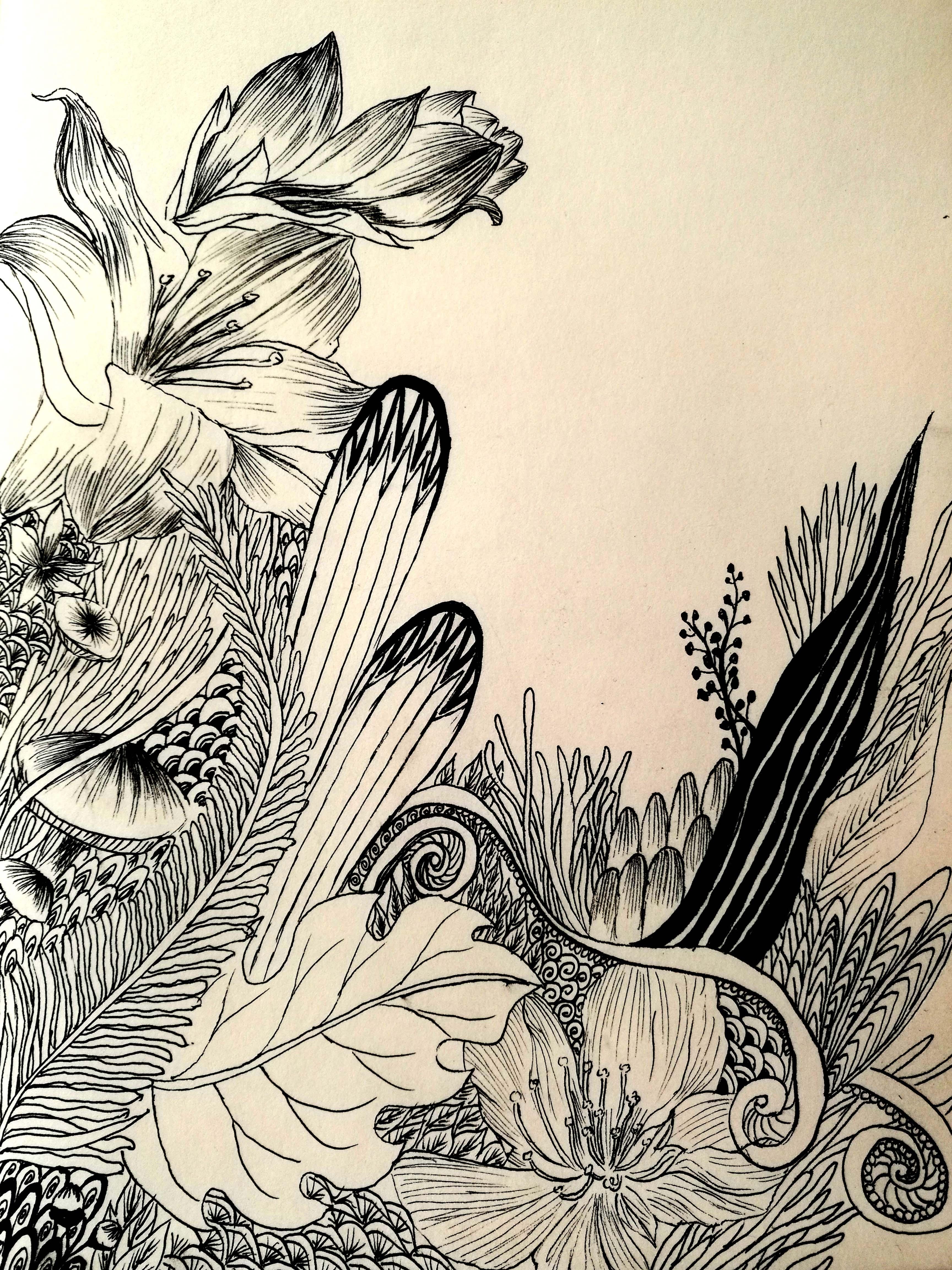 桃花十里集赞送礼——植物手绘